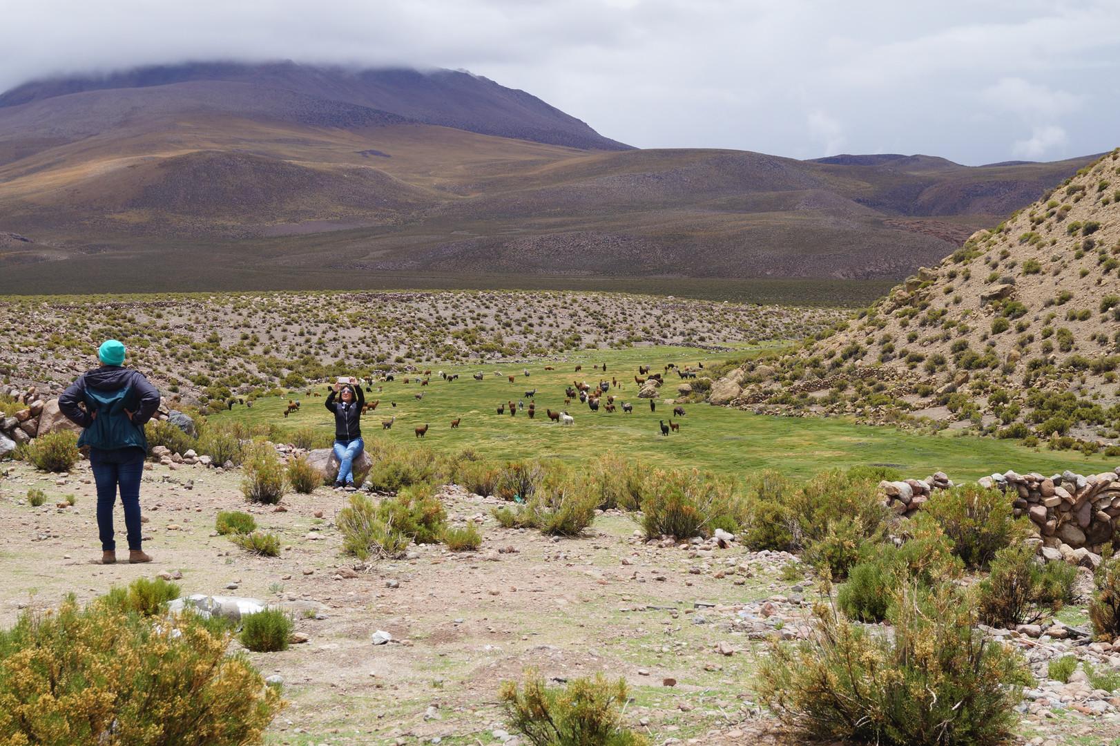 Parque Nacional Isluga