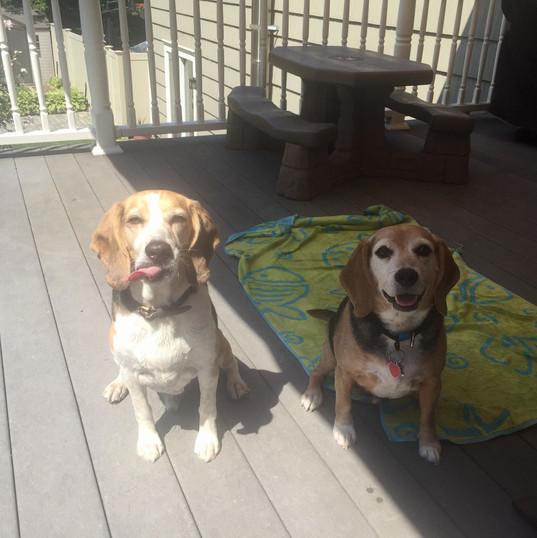 Roscoe and Milo