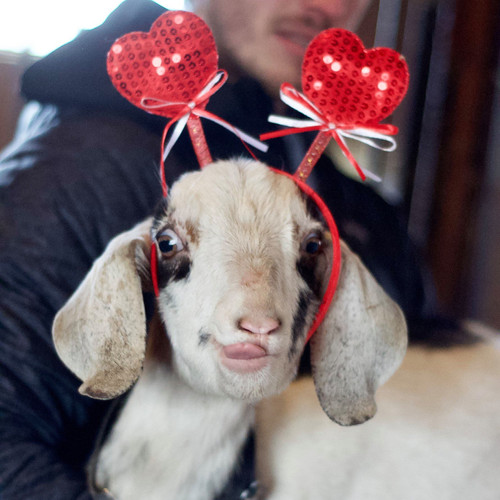 Ready for Valentine's Day