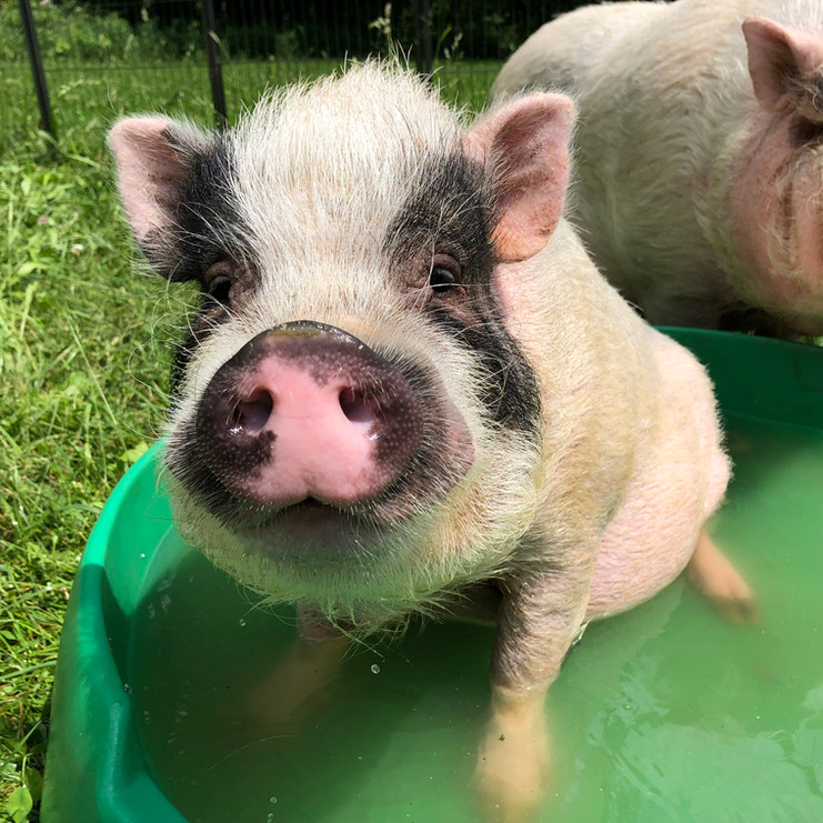 Ed loves the pool!