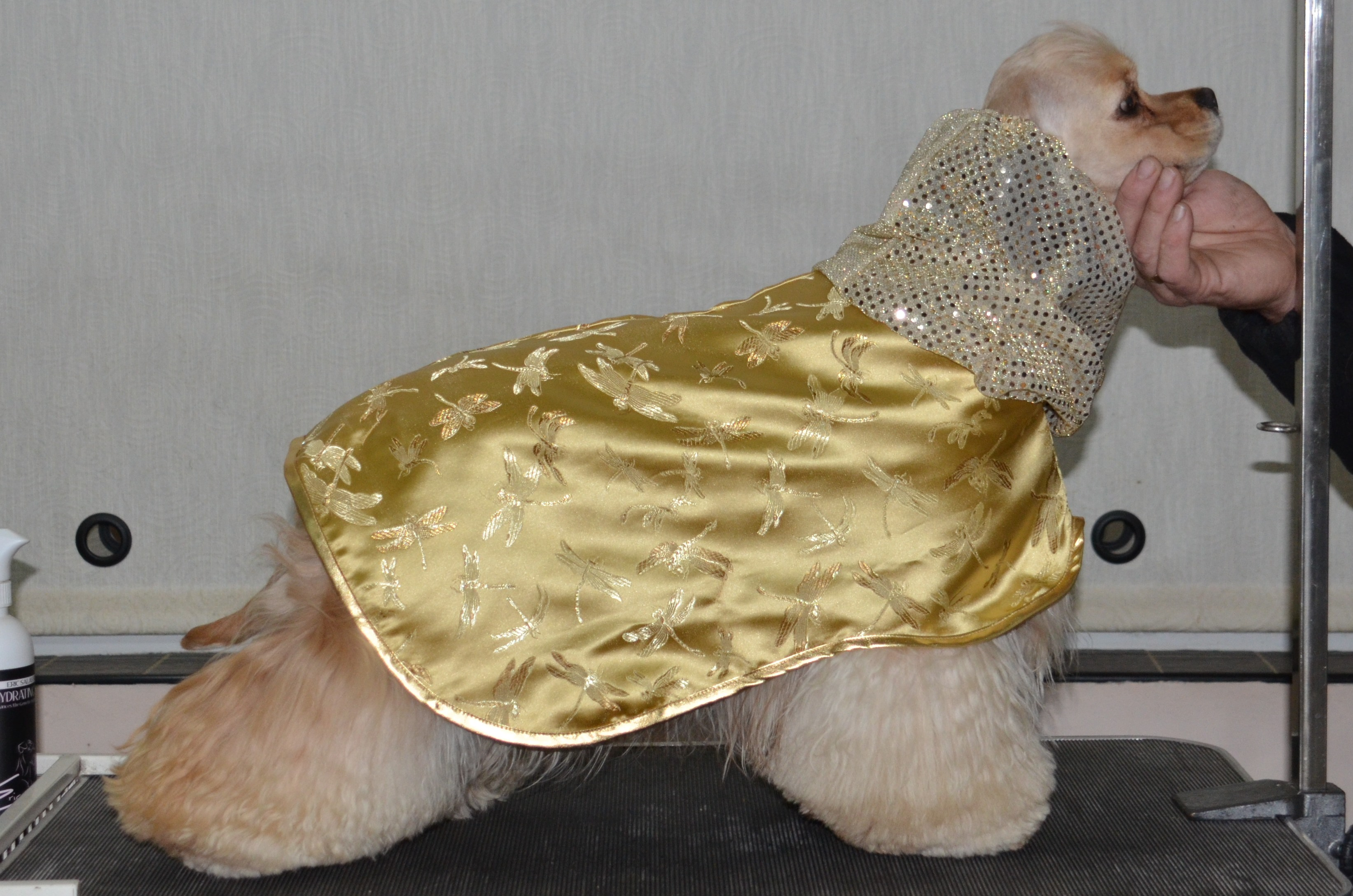 Pia BIS at ACSCGB  in her silk coat