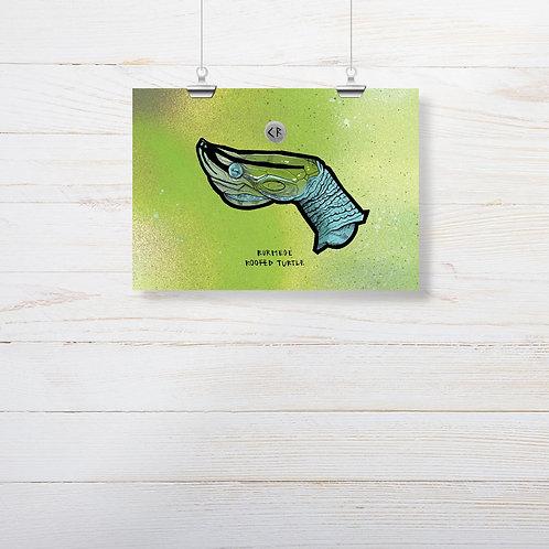 Kieran Page 'Burmese Roofed Turtle' A5 Print