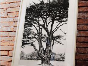 Sara Muzira  The Cedars of Lebanon at Hardwick Heath