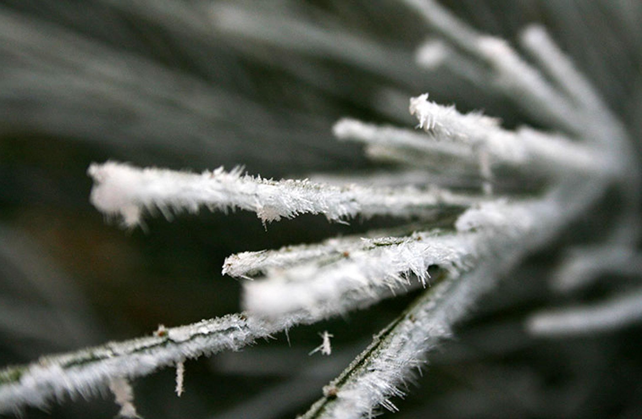 Mill-Tye-Gallery-Winter-Frosty-4
