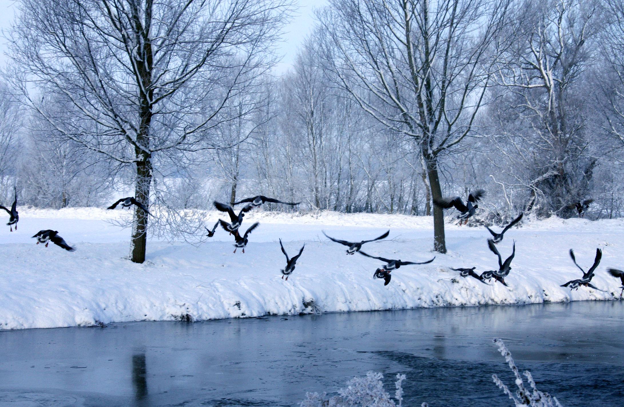 Mill-Tye-Gallery-Winter-Birds-Landing