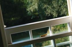 Mill-Tye-Gallery-Window