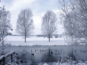 A Winter's Tale... Christmas at Mill Tye Gallery