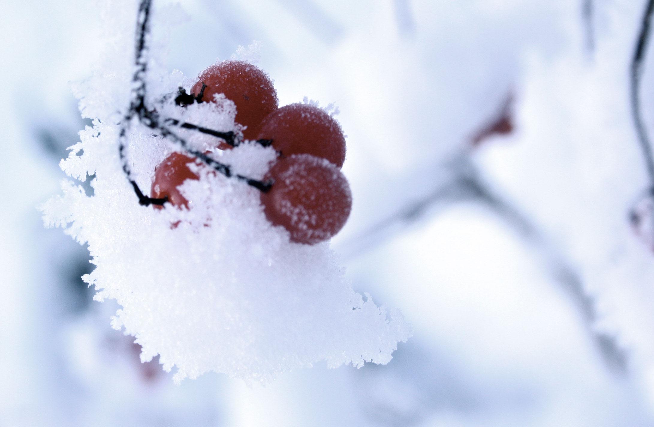 Mill-Tye-Gallery-Winter-Berries
