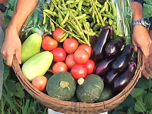 なぜ旬の食べ物が体に良いのか?