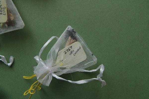 organza seed bags close.jpg
