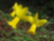 Warbler 1.jpg