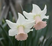 Lilac Charm.jpg
