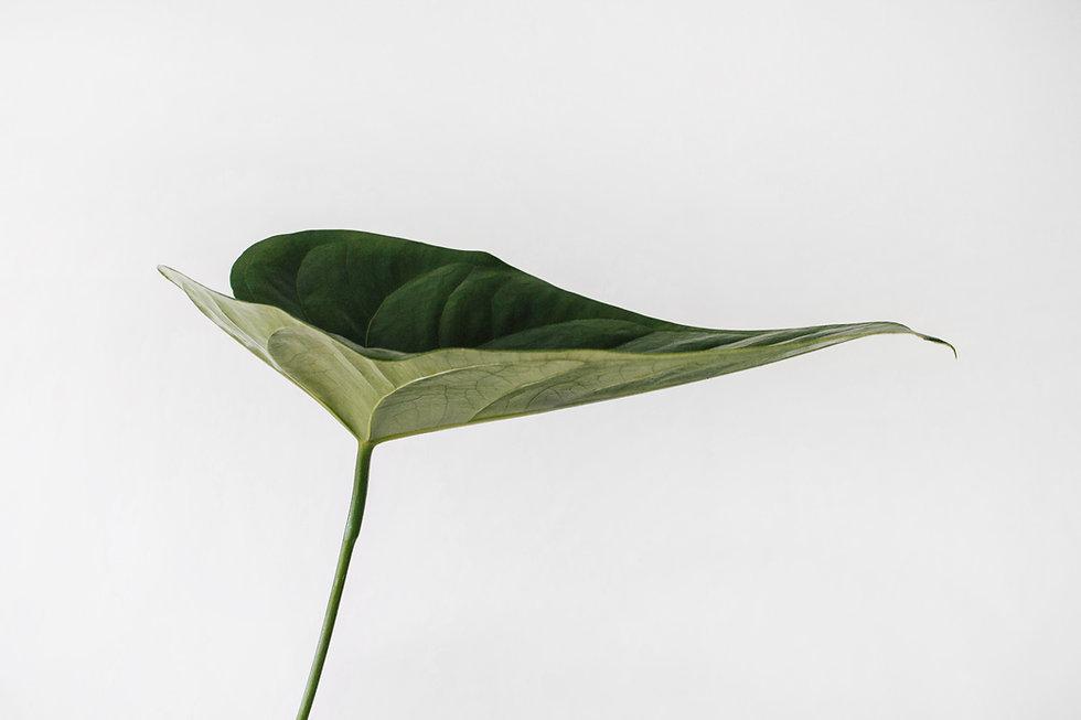Karo Brand Leaf