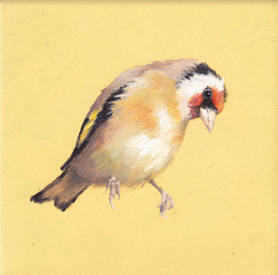 Goldfinch on Yellow