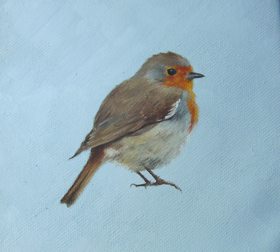 Robin on Blue