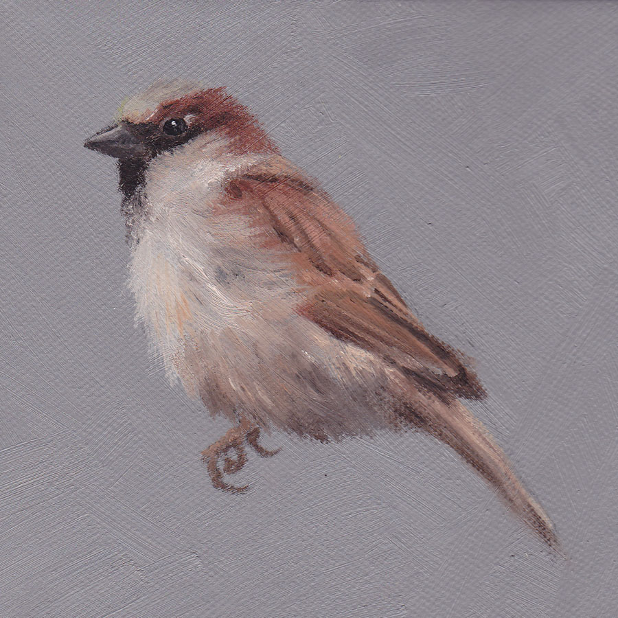 Sparrow on Grey