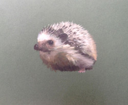 Hedgehog on Green