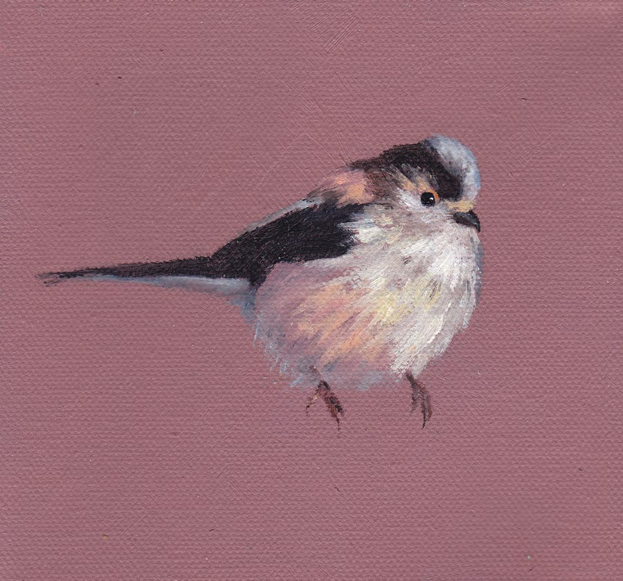 Long Tailed Tit on Pink
