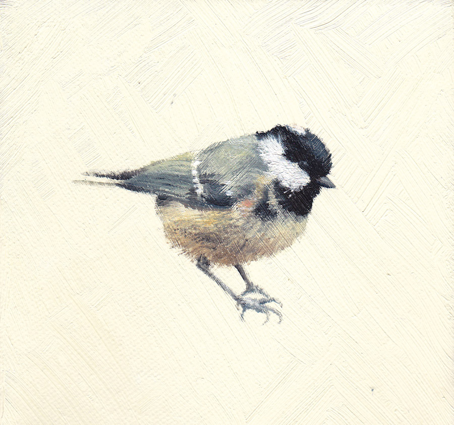 Coal Tit on Cream