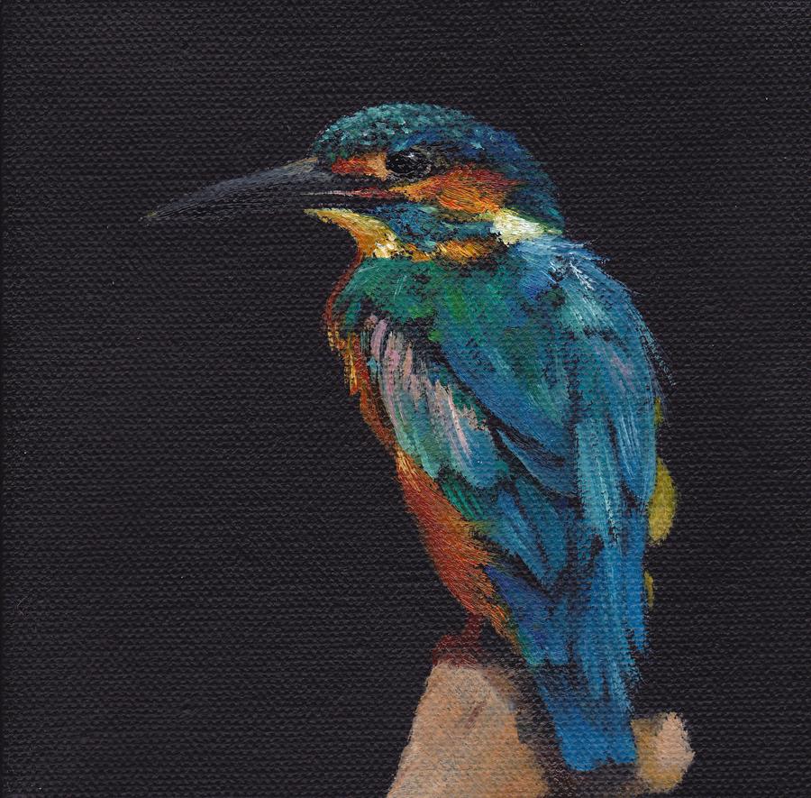 Kingfisher on Black