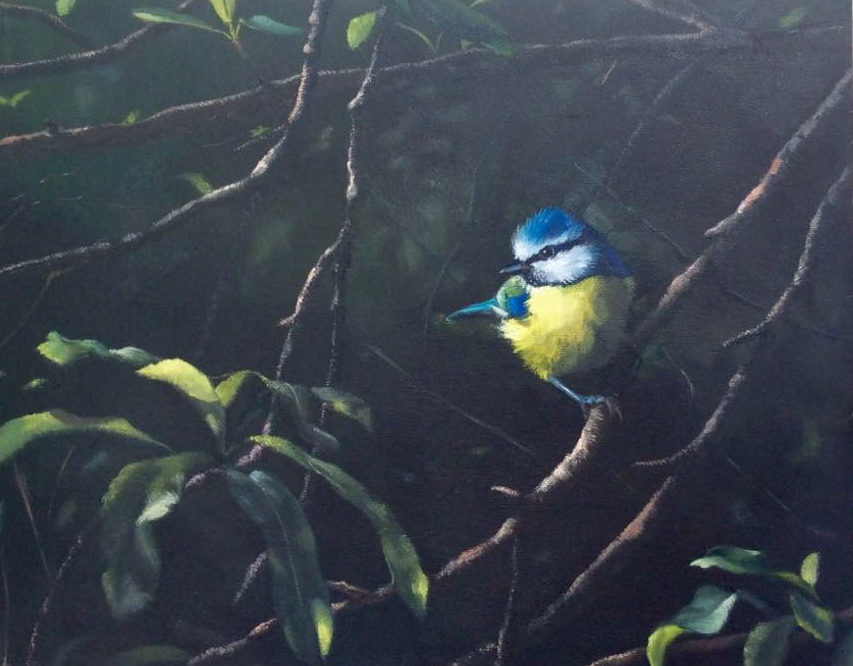 Blue Tit in the Firethorn
