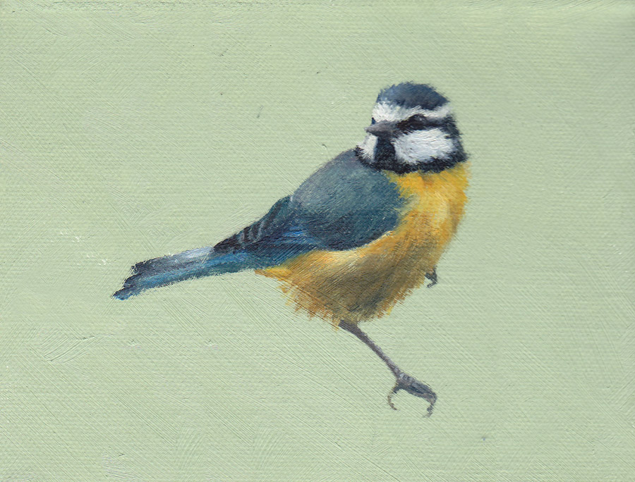 Blue Tit on Green