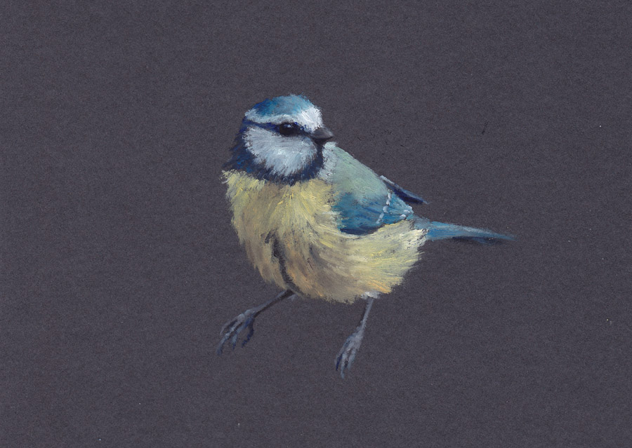 Blue Tit on Grey