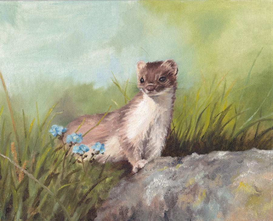 Stoat with blue flowers