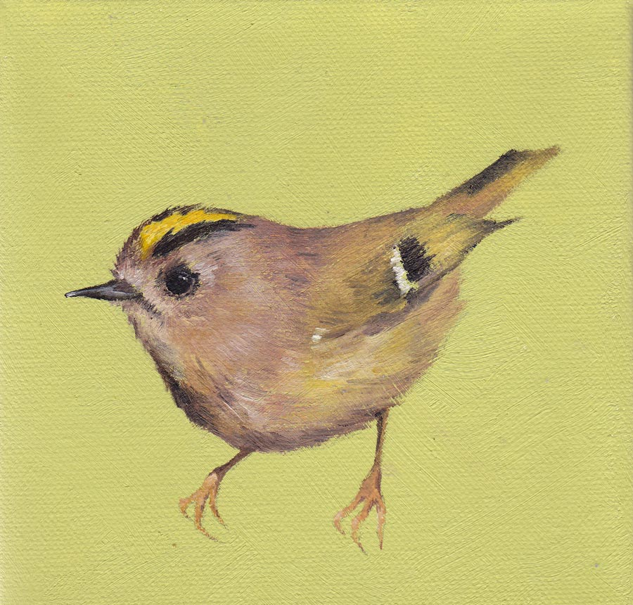 Goldcrest on Green