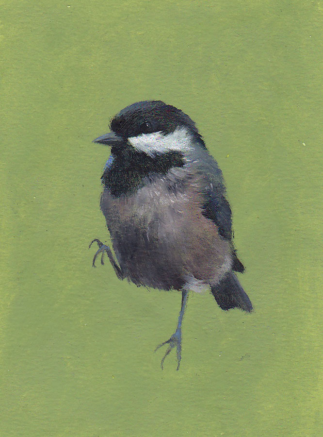 Coal Tit on Green