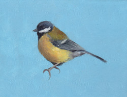 Great Tit on Blue