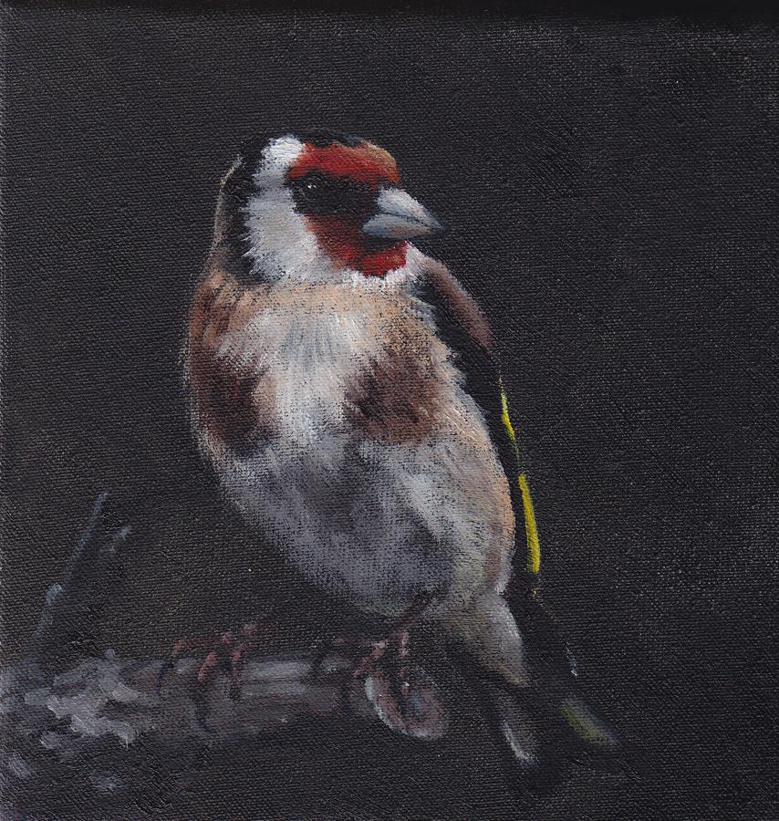 Goldfinch on Black