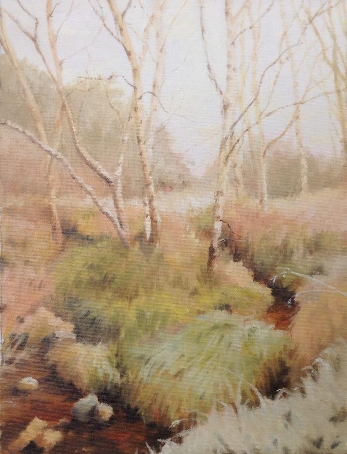 Woodland Stream, Monymusk