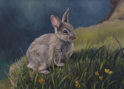 Cliff Rabbit