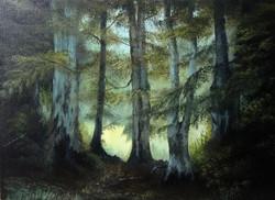 Fairy Circle, Paradise Woods