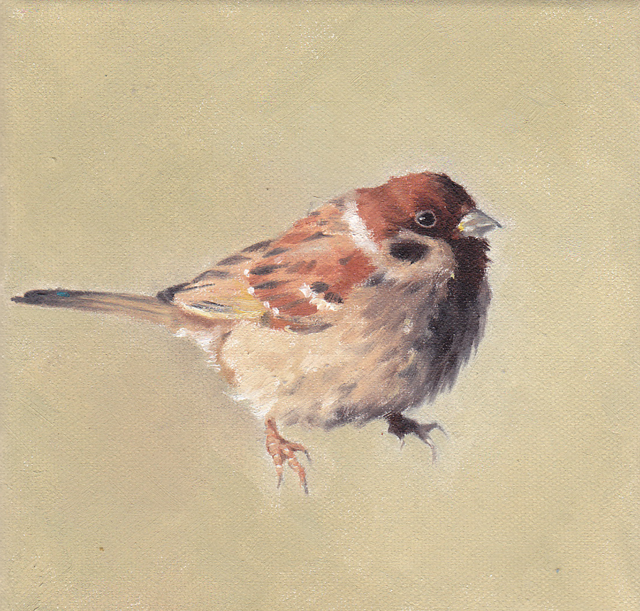 Tree Sparrow on Green