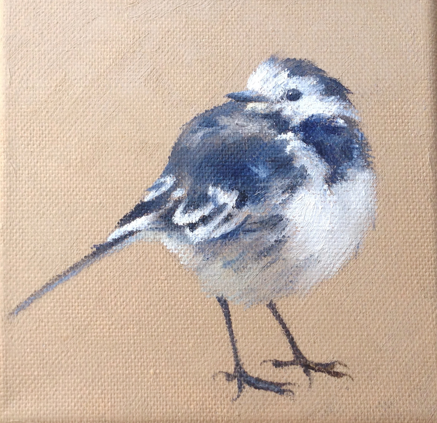 Pied Wagtail on Brown