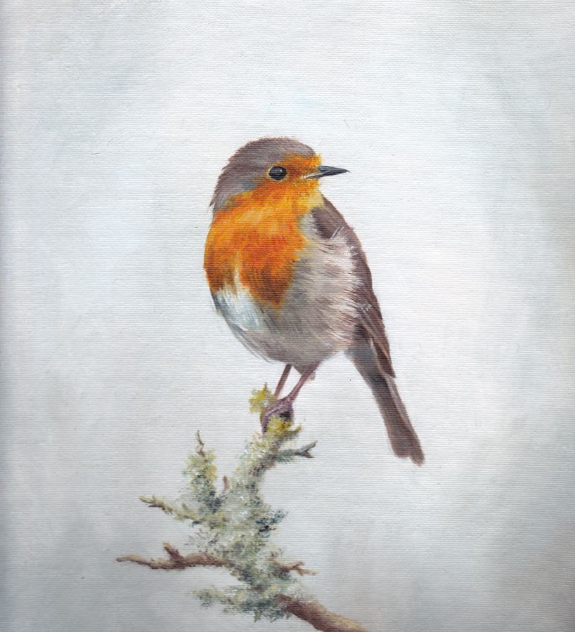 Robin on Grey