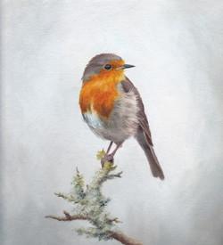 Robin on Grey