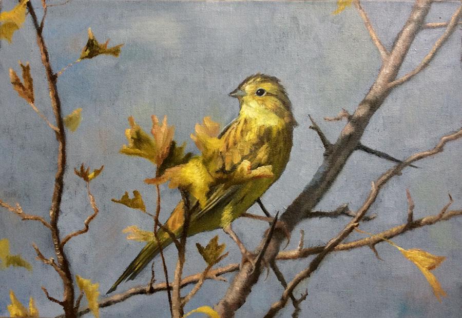 Yellowhammer, Yellow Leaves