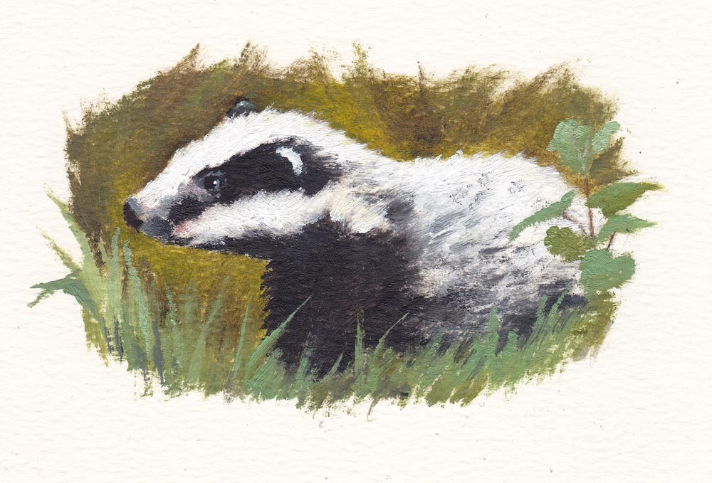 Tiny Badger