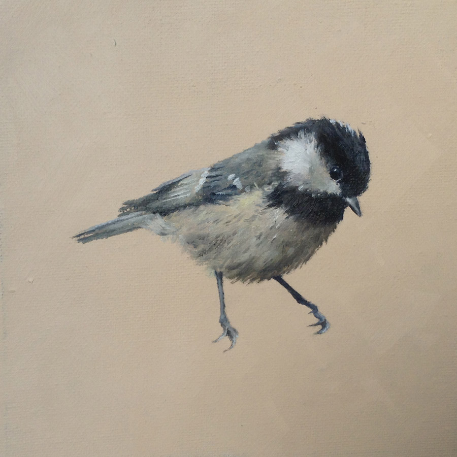 Coal Tit on Light Brown