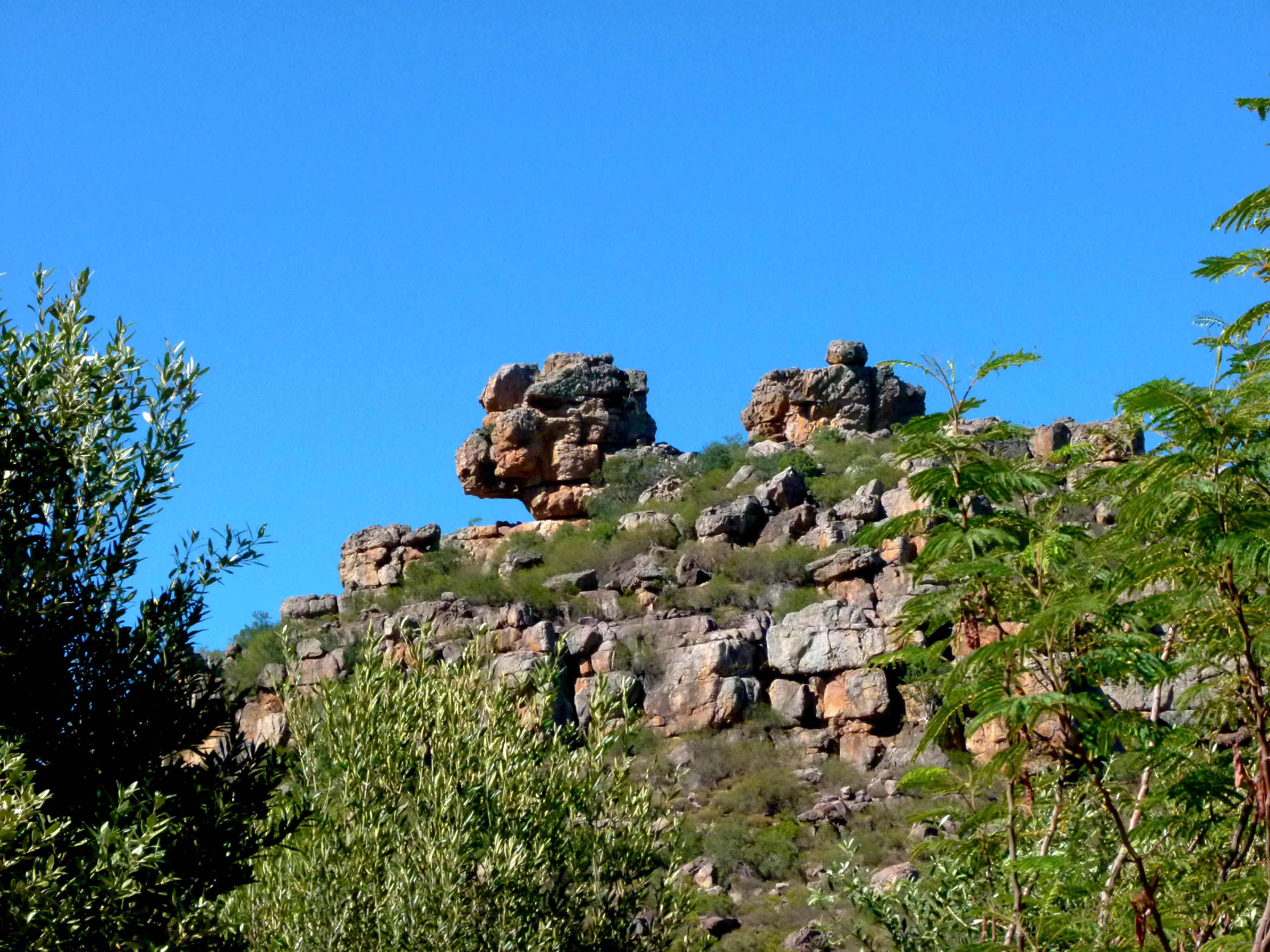 Citrusdal   Koningskop 075
