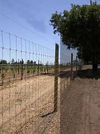 Field Fence with Barbed Wire