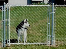Use fence to contain your animals