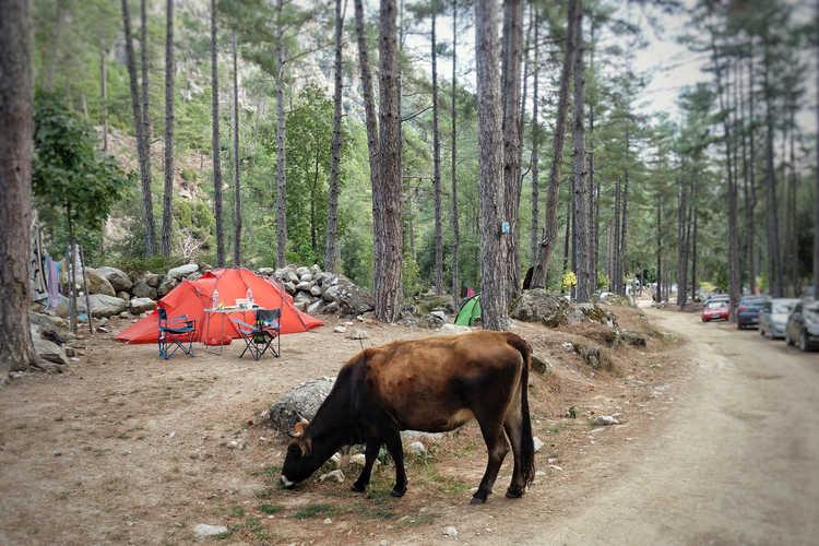 Camping Tuani im Restonicatal