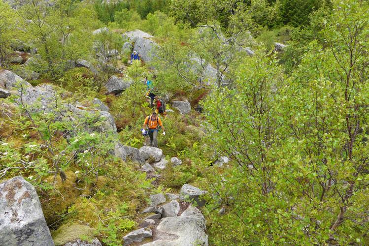 Zustiege durch Birkenwälder