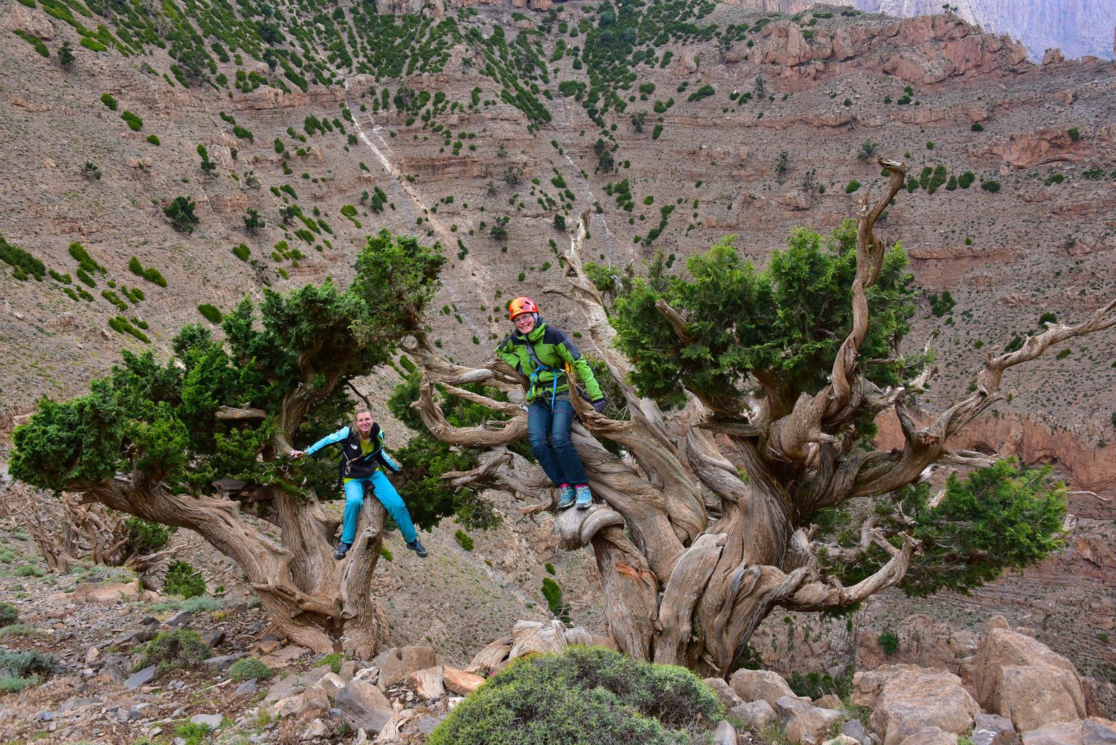 Die Bäume habens nicht leicht