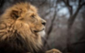 Südafrika Klettern und Safari