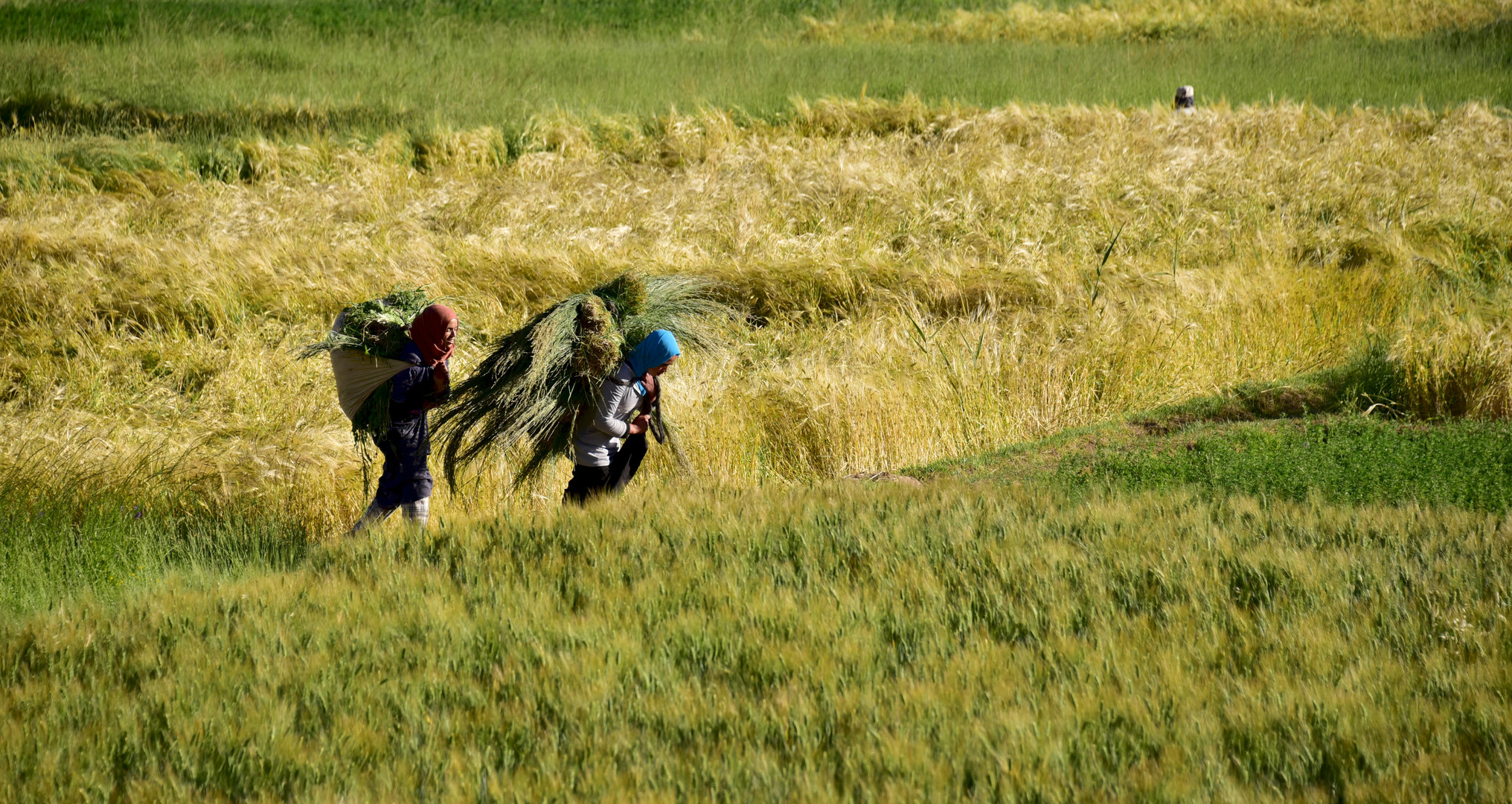 Handarbeit in der Landwirtschaft